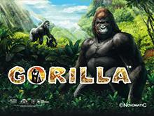 Игровой автомат Gorilla без СМС и без регистрации