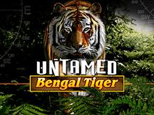 Неукротимый Бенгальский Тигр